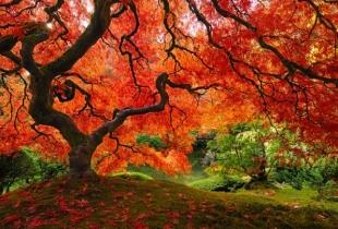 TOP - Cei mai spectaculosi copaci din lume