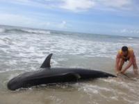 """""""Mainile imi sunt pline de basici si julituri"""". Povestea incredibila a unui tanar care a prins un rechin de 4 metri. VIDEO"""