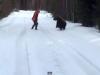 Sa mori de ras nu alta! Un barbat a avut o reactie incredibila cand a fost atacat de un urs - VIDEO