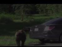 I-a bagat in sperieti: Un urs a luat cu asalt masina in care se afla o familie americana. Cum s-a incheiat totul - VIDEO