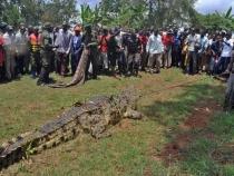 Un crocodil a ucis si mancat o femeie insarcinata. Nu iti poti imagina ce a facut sotul acesteia dupa - FOTO