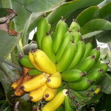 A pus intr-un vas corji de banana verzi si fasole! Senzational! Cu siguranta o sa incerci si tu aceasta reteta