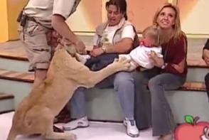 Momente de groaza la un show TV: Un leu inhata o fetita din bratele mamei. In loc sa actioneze ca sa-si salveze fetita, aceasta rade in hohote - VIDEO