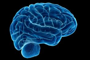 Descoperire uimitoare! Aceasta planta imbunatateste memoria cu 75% - FOTO