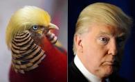 Un fazan, leit Donald Trump. Vezi clipul care face senzatie pe internet - VIDEO