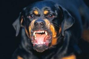 Un copil de 3 ani a fost sfasiat de un caine Rottweiler. Ce a patit cainele agresiv dupa incident