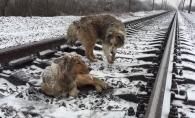 Era prea ranit ca se mute din fata trenului, asa ca prietenul i-a venit in ajutor. Catelul care a emotionat cu gestul lui - VIDEO