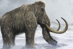 Mamutul lanos, specimen disparut de peste 4.000 de ani, va reinvia! Ce spun savantii