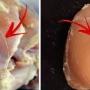 Iata ce reprezinta dungile albe de pe carnea de pui, cumparata din magazine! Devine periculoasa pentru sanatate?