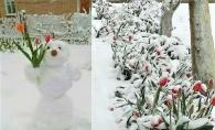 Protejeaza-ti plantele de frig si de inghet! Ai grija de gradina ta - FOTO