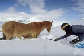 Un cal a ramas blocat in zapada 4 zile. Cum reactioneaza atunci cand un strain se apropie de el si incearca sa il ajute - VIDEO