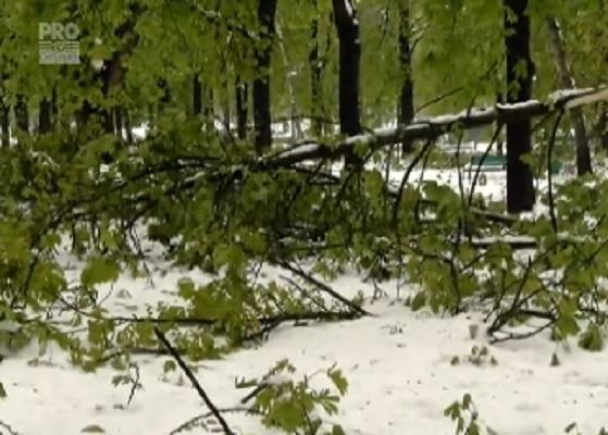 Este un dezastru total. Iata cum arata parcul de la Catedrala, dupa ninsorile abundente: banci rupte si copaci smulsi din pamant - VIDEO
