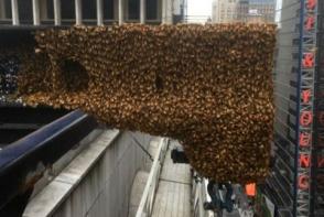 Show de albine in centrul New York-ului! 30.000 de albine au creat panica printre cetateni - VIDEO
