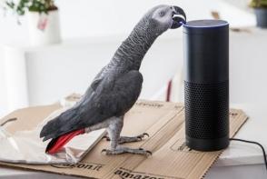 Un papagal a plasat o comanda pe Amazon, dupa ce a imitat vocea stapanei sale. Cum s-a intamplat totul