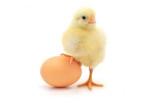 Care a fost primul, oul sau gaina? O dilema veche de mii de ani a fost lamurita! Ce raspuns dau oamenii de stiinta